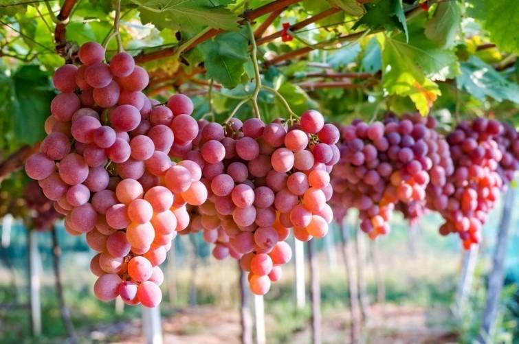 582f2fa038613_crop